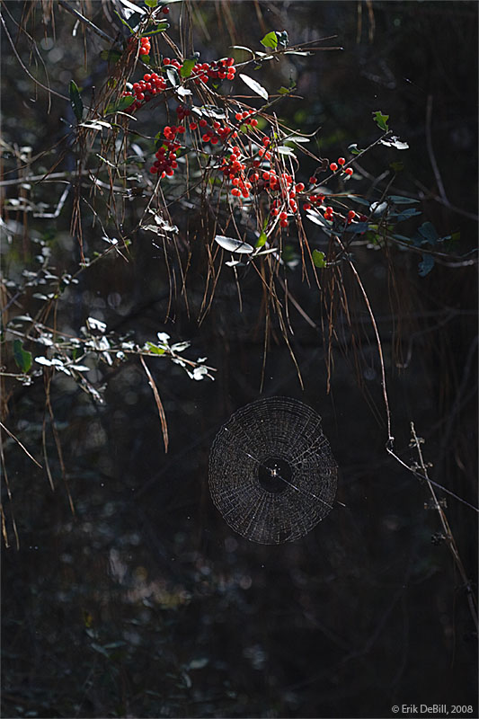 Berries and Web